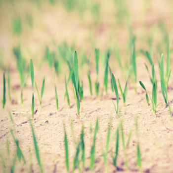 How to Sow Good Seed in your Life