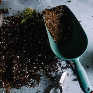 Is the soil you're planted in nourishing progress?