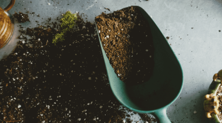 Are you growing in good soil?